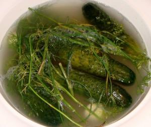 Cucumbers-Pickling
